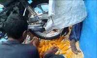 Ziarno kukurydzy