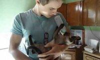 Kot pije z butelki jak małe dziecko