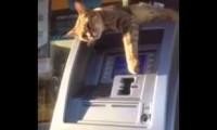 Bankomat jest nieczynny