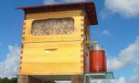 Ul, który pozwala na podbieranie miodu bez przeszkadzania pszczołom