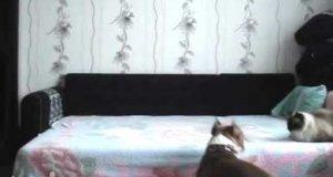 Kiedy pies zostaje w domu sam