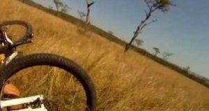 Rowerzysta potrącony na polnej drodze