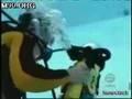 Pływający kot