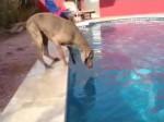 Pies, który nie lubi wody
