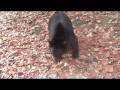 Niedźwiedzie Czarne to boidudki!
