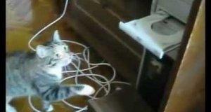 Co te koty wyrabiają? - kompilacja