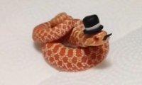 Wąż z wąsami i kapeluszem - Like a Sir