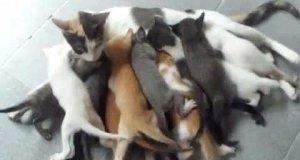 Kotka vs 16 kociaków