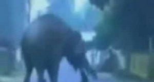 Wypadki ze zwierzętami