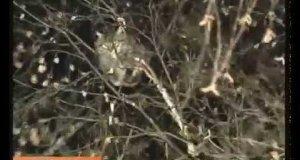 Rosyjscy żołnierze ściągają kota z drzewa. Po rosyjsku