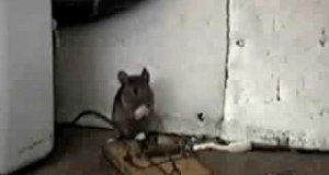 Szczęśliwa mysz