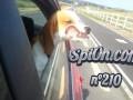 Le Zap de Spi0n n°210