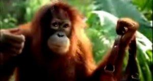 Podstępne małpy