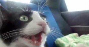 Koty uwielbiają szybkie samochody