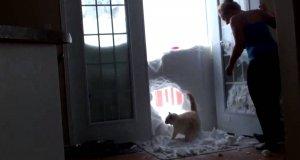 Potwornie głodny kot