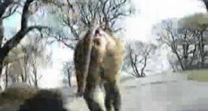 Przygoda z małpami