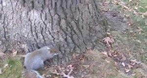 Nachlana wiewióra