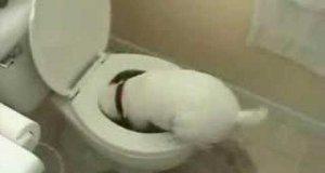 Pies grzebiący w toalecie