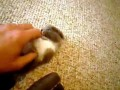 Bojowy kotek