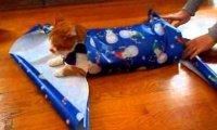Jak zapakować kota na święta