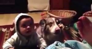 """Pies szybciej od dziecka nauczył się mówić """"mama"""""""