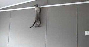 Kot - pająk