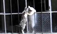 Mały kotek wciągany oknem przez swoją mamę