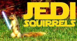 Wiewiórka Jedi