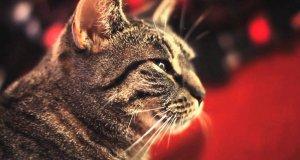 Kot - wokalista rockowy