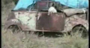 Kociaki w akcji