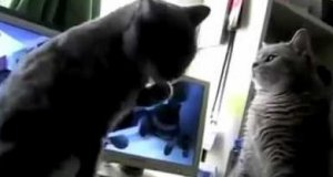 Koty grają w łapki