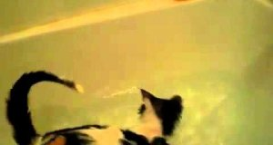 Kot uwielbia zabawę w wodzie