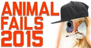 Kompilacja faili z udziałem zwierząt - FailArmy