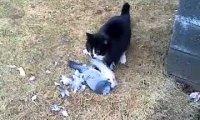Kot upolował gołębia?