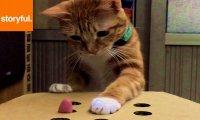 Kartonowa zabawka dla kota