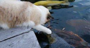 Kot odwiedza rybki