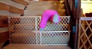 Mission Impossible: Ucieczki bobasów
