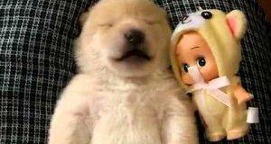 Piesek, któremu coś się śni