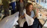 Atak rekina w sklepie rybnym