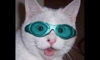 Śmieszne kotki