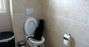 Kot na toalecie