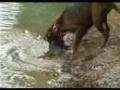 Pies - rybak