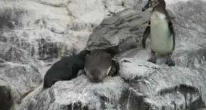 Ale drań z tego pingwina