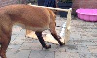 Świetny pomysł na zabawę dla psa