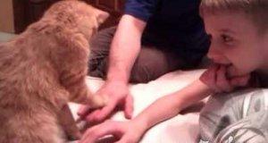 Kot i ręce