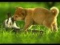 Zdjęcia zwierzaków