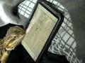 Agama Brodata gra w Ant Crusher