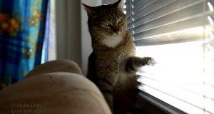 Wakacyjna nuda kotka