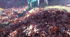 Pies szuka piłki w stercie liście