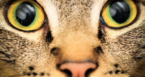 Jak widzą zwierzęta?